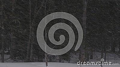 Tempête de neige pendant la saison d'hiver de forêt Cr?puscule de soir?e banque de vidéos