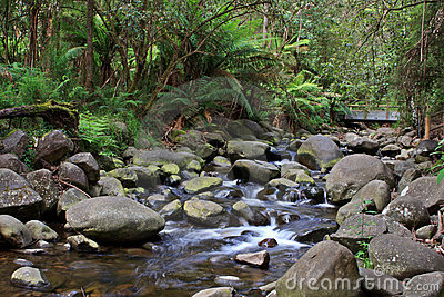 Temperate Rainforest Creek