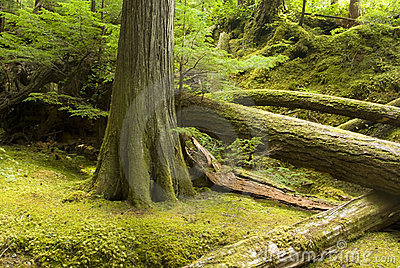 Temperate rainforest and undergrowth
