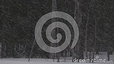 Tempestade de neve na estação do inverno da floresta Crep?sculo da noite vídeos de arquivo