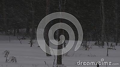 Tempestade de neve na estação do inverno da floresta Crep?sculo da noite video estoque