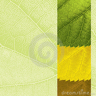 Template with leaf texture