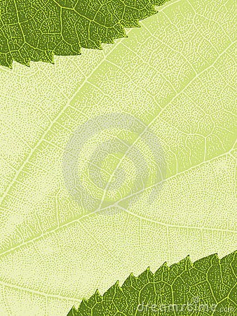 Free Template With Leaf Texture Royalty Free Stock Image - 13650676