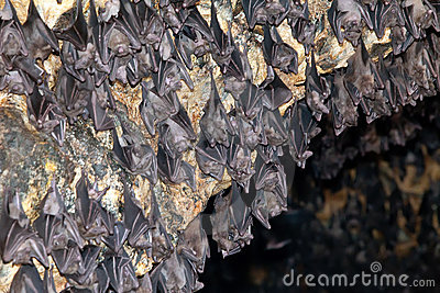 In a temple of a bat. Indonesia. Bali