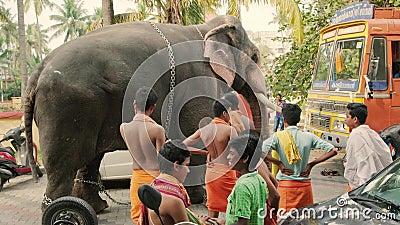 Temple elephant parkerad på gatan i Fort Kochi, Indien lager videofilmer