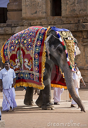 Free Temple Elephant - Thanjavur - Tamil Nadu - India Royalty Free Stock Image - 16592656