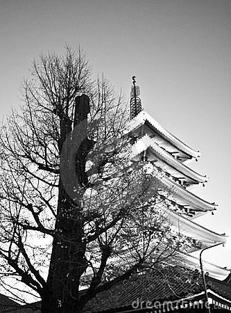 Temple in Japan, Tree and Pagoda