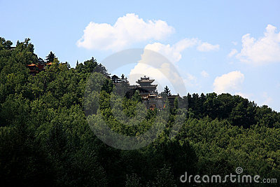 Temple surrounded by pine tree on mountain