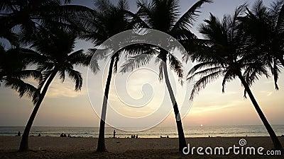 Temps-faute de premier plan de coucher du soleil et de noix de coco banque de vidéos