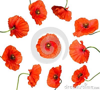 Free Ten Poppy Flowers Isolated On White Royalty Free Stock Photos - 11164588
