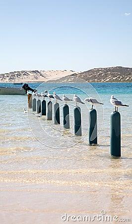 Free Ten Seagulls Sitting On Poles Stock Image - 3043011