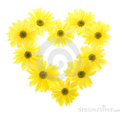Ten Yellow Daisy Flowers in Heart Shape