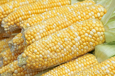 Tender corn cobs