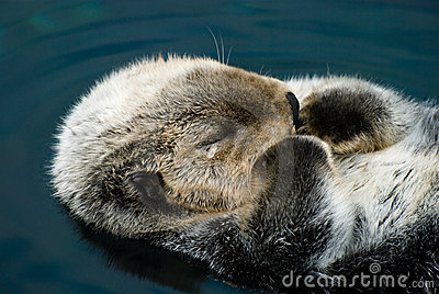 Tender crying otter