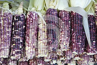 Tender maize cob