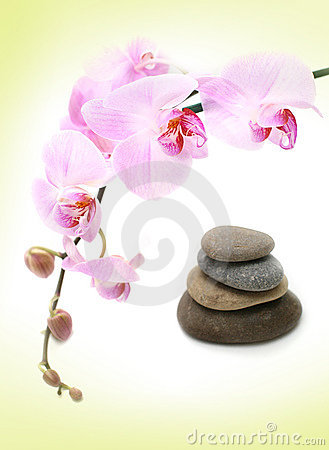 Tender orchid background
