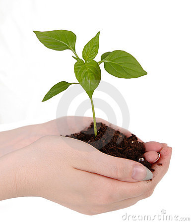 Free Tender Seedling Resting On Woman&x27;s Hands Royalty Free Stock Photos - 19841468