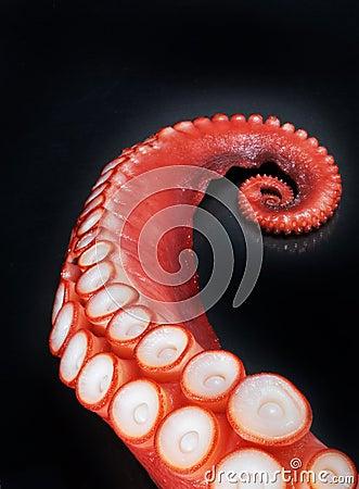 Tentáculo rojo del pulpo