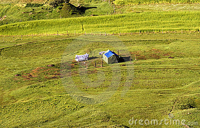 Tent in the farm field