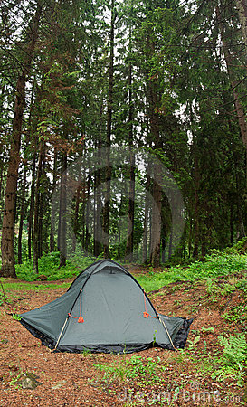 Tent nestled in early morning wilderness campsite