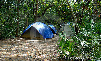 Tents in forest clearing