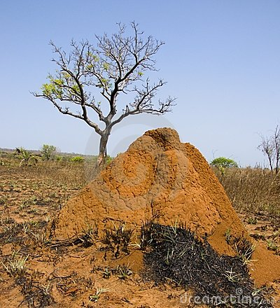 Termite hill in Madagacar central