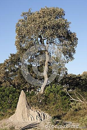 Termite mound - Botswana