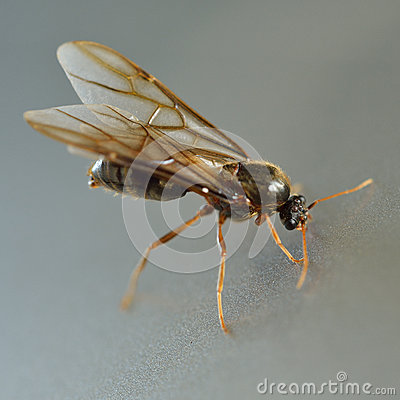 Free Termite White Ant Royalty Free Stock Image - 39653236