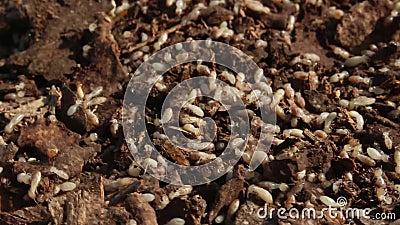 Termity w gniazdeczku