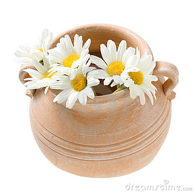 Terra Cotta Flower Pot with Daisies