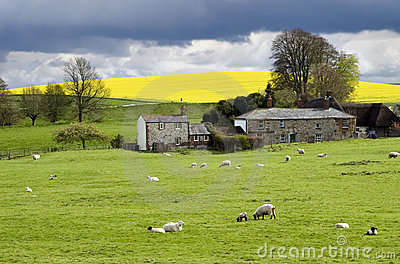 Terra inglesa na primavera