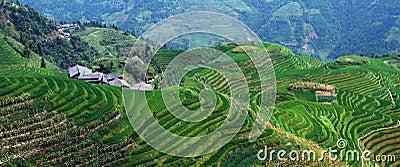 τοπίο terraced