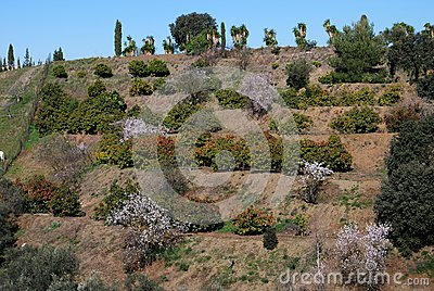 Terraced farmland, Alhaurin el Grande, Andalusia.