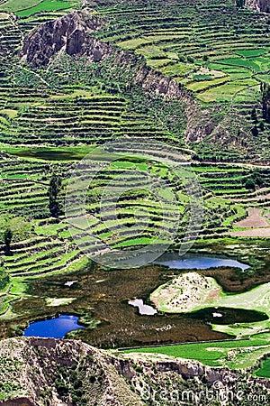 Free Terraced Field, Peru Royalty Free Stock Image - 13885976