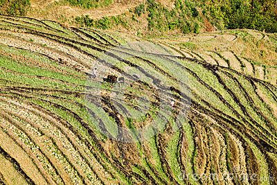 Terraced fields cultivation in the spring
