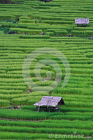 Free Terraced Rice Fields In Northern Thailand Stock Photography - 28021942