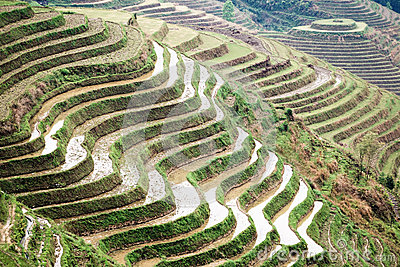 Terraces in springtime