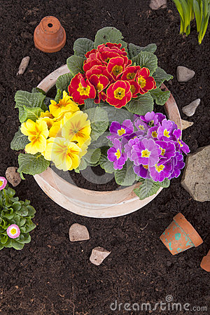 Free Terracotta Flower Pot With Spring Flowers Stock Image - 29095891