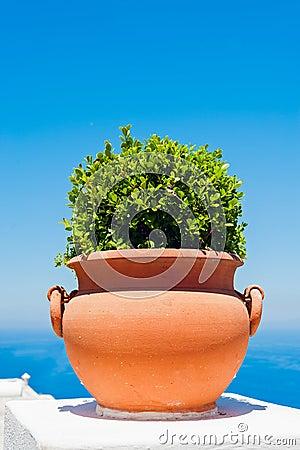 Terracotta flowerpot, Capri