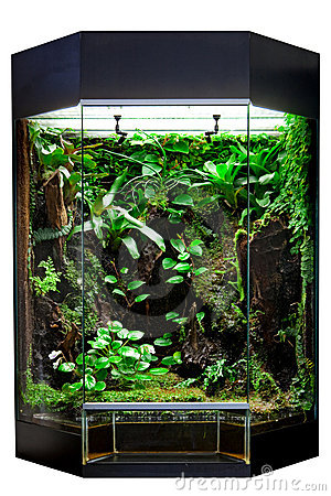 terrarium pour l 39 animal familier tropical de for t humide images stock image 20134544. Black Bedroom Furniture Sets. Home Design Ideas