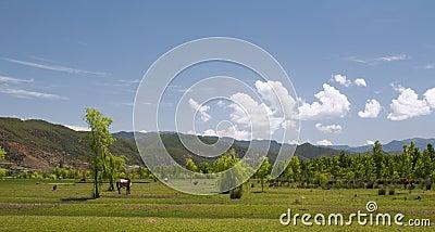 Terre della prateria di rotolamento con il cavallo