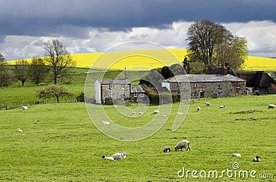Terreno coltivabile inglese nella primavera