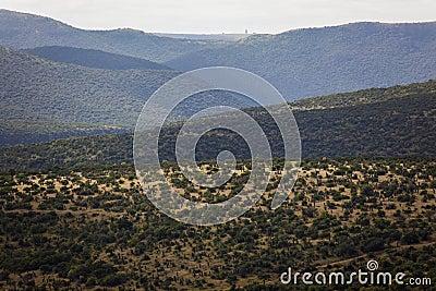Terreno salvaje de los valles de las colinas de la vegetación de los árboles del áloe