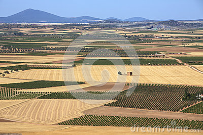 Terres cultivables de Mancha de La et vignes - Espagne