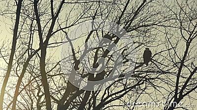 Terres d'aigle chauve au crépuscule clips vidéos