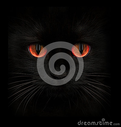 Free Terrible Muzzle Of A Black Cat With Red Eyes Stock Photos - 79501683