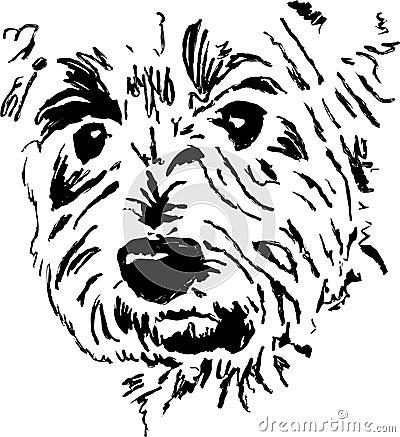 Terrier dog face