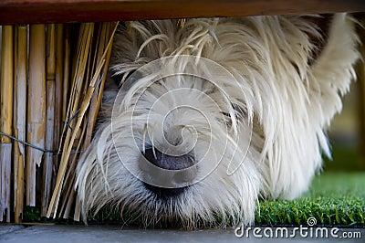 Terrier joven bajo la barandilla