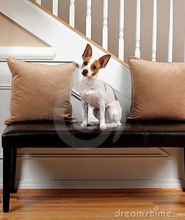 Free Terrier Tilt Royalty Free Stock Photography - 3721527