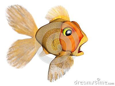 Terrified goldfish